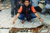 Polda Riau membongkar sindikat perdagangan organ harimau sumatera