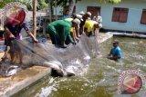 Dinas Perikanan dorong masyarakat Sumsel budi daya ikan