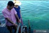 Akibat ada limbah minyak hitam, Turis asing batal snorkeling