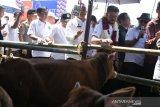 Mentan: Pemerintah berupaya mempercepat swasembada daging