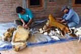 Eskavasi Fosil Gajah