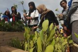 Ditpolairud Polda Sulteng tanam 3000 mangrove di Pantai Teluk Palu