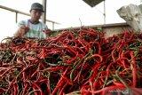 Harga cabai keriting di Pekanbaru terus naik tembus Rp56.000 perkilogram