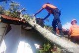 Diterpa angin kencang, pohon dan tiang listrik roboh timpa tiga bangunan di Agam, Sumbar