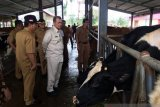 Sumbar akan inseminasi 120.000 ekor indukan sapi pada 2020