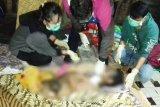 Seram! istri temukan mayat suami dengan alat kelamin terpotong dan usus terburai di Pulpis