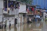 Banjir rawa teratai Jakarta