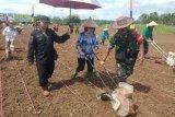Pemkab Gumas targetkan tanam jagung hibrida seluas 500 hektare