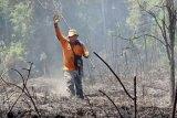 Sudah enam kali kebakaran lahan di Barito Selatan