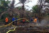 Hanguskan lima hektare lahan sawit di Pasaman Barat , tim gabungan  terus berupaya padamkan api