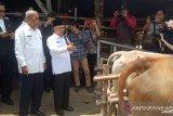 OKU Timur target populasi sapi bertambah 10.000  ekor 2020