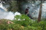 Desa Braja Asri  lakukan fogging untuk cegah DBD