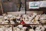 Pedagang ayam di Mamuju kehabisan stok jelang Ramadhan