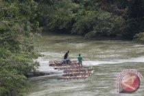 Masih ada penebangan liar di Kalimantan Tengah