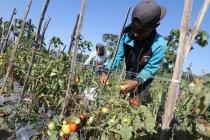 Petani Purworejo jual hasil tani melalui jaringan digital
