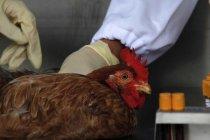 Inggris laporkan flu burung pertama sejak 2017