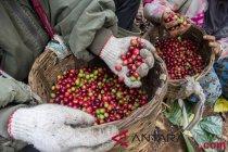 Pertumbuhan industri kopi diharapkan dorong lahirnya lebih banyak petani kopi milenial