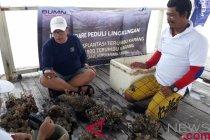 Indonesia Re perbaiki ekosistem laut Kepulauan Seribu