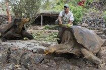 Gapura Darwin runtuh akibat erosi
