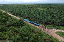 Puluhan perusahaan sawit  diduga tidak realisasikan CSR