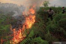 9 unit damkar padamkan kebakaran lahan di Lhokseumawe