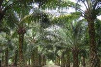 Pemerintah pastikan tidak ada deforestasi di Papua