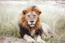 Hewan penghuni Taman Nasional Kruger di Afrika Selatan