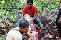 Polisi usut kasus pembunuhan di kebun sawit