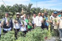Distan Kalbar genjot produksi cabai dan bawang