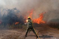 Kebakaran hutan dan lahan di Portugal, 1000 pemadam kebakaran dikerahkan