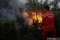11.040 titik panas terpantau di wilayah Kalimantan Tengah