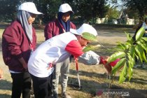 Peserta SMN Riau ikut tanam pohon kenari di Prambanan