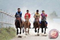 330 ekor kuda ikuti pacuan tradisional di Takengon