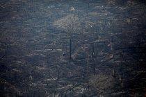 Pesawat tempur Brazil turut bantu proses pemadaman kebakaran Amazon