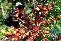 Ini harapan petani pada Mentan Syahrul