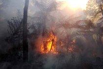 Ganjar minta pengebom air untuk padamkan kebakaran hutan Gunung Slamet
