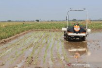 Akademisi: Penerapan teknologi dongkrak ekspor pertanian