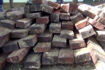 BKSDA Sultra gagalkan pengolahan kayu ilegal dalam kawasan hutan