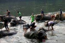 Thailand laporkan 38 kasus baru COVID-19, satu kematian