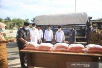 Mustahik binaan Baznas Riau panen raya ubi casesa