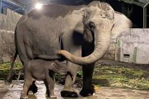 Pastikan keselamatan satwa, Dirjen KSDAE tinjau Kebun Binatang Gembira Loka