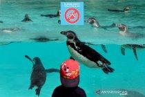David Attenborough ajukan donasi badan amal kebun binatang Inggris