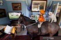 Pemerintah Inggris rencanakan penjualan saluran TV Channel 4