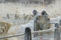 Busa air laut saat gelombang besar di Cape Town Afrika