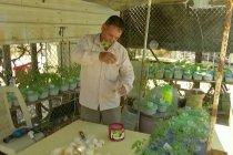Pengungsi Suriah berkebun sayur di gurun Yordania