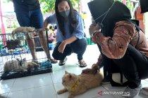 Vaksin rabies gratis di Palembang