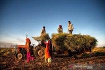 Indeks harga pangan dunia capai angka tertinggi dalam 6 tahun