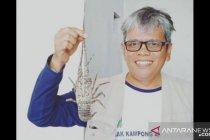 Pakar sarankan dua pendekatan pemanfaatan budidaya lobster