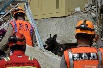 Pencarian korban gempa dengan anjing pelacak