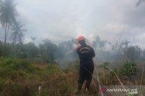 Lahan seluas tiga hektare terbakar di Kabupaten Bintan